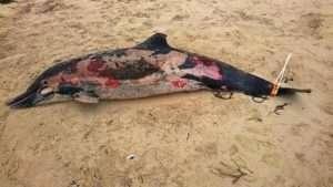 اتفرجوا .. ما تلقوه في البحر يؤذي الحيوانات