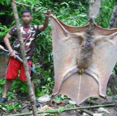اتفرج واوعي تخاف - خفاش عملاق يثير الجدل على السوشيال ميديا