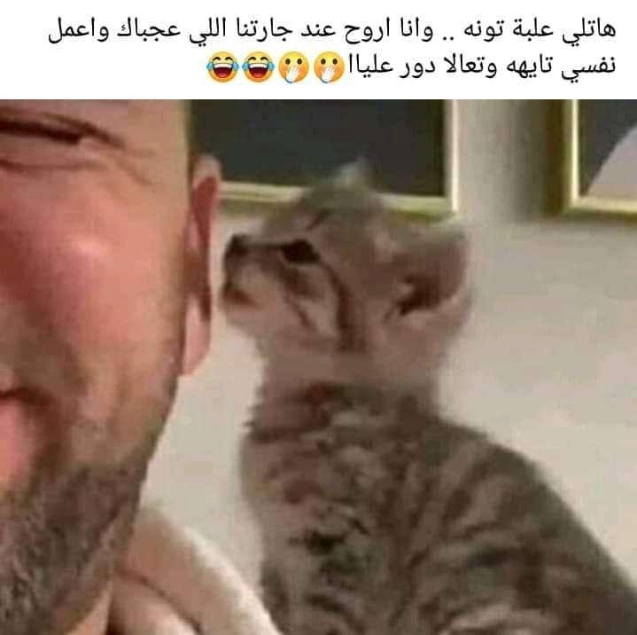 أحلى مثل ده ولا أيه ... يا رب ارزقنا الجمل بما حمل
