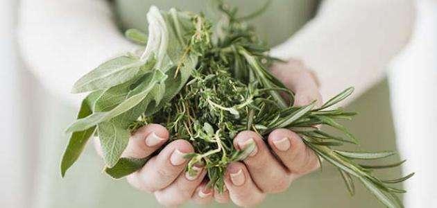 افضل نصائح وطرق منع الحمل بالأعشاب