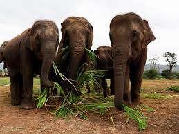 فيلة حديقة الحيوان المصرية تتطالب بالمساواة وعايزين حشيش