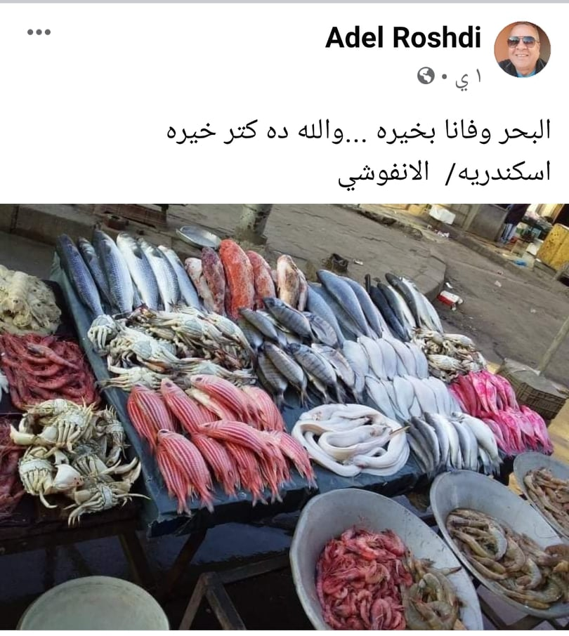 شوفوا سمك اسكندرية حلو ازاي - صورة