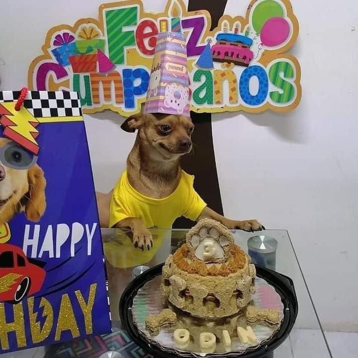 """ايه الفولح ده .. عيد ميلاد الكلب """"كوكو"""" يثير ضجة الفيسبوك"""