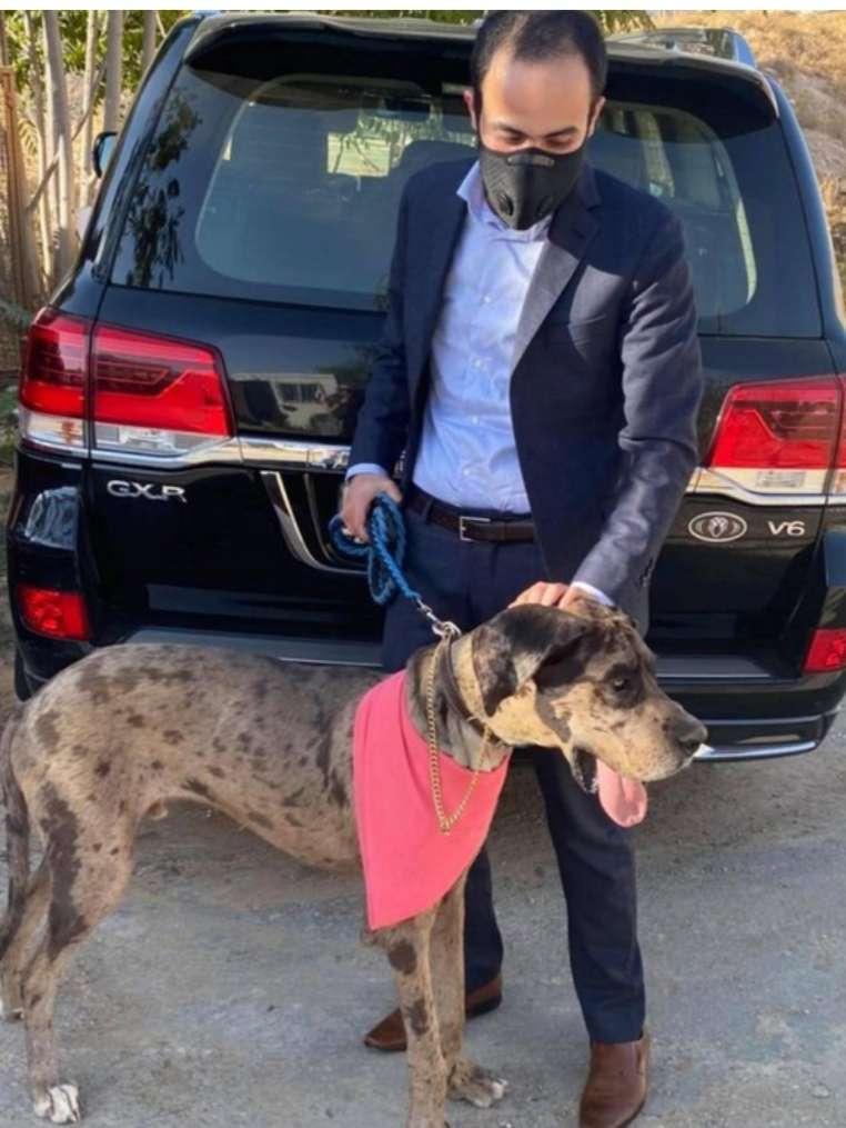 الأردن: مكافأة 15 ألف دولار لمن يجد هذا الكلب الضائع !.. صور