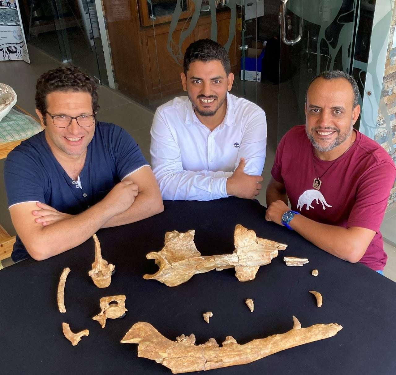 اكتشاف حوت برمائي عاش في مصر قبل 43 مليون عام.. خرج من التنسيق