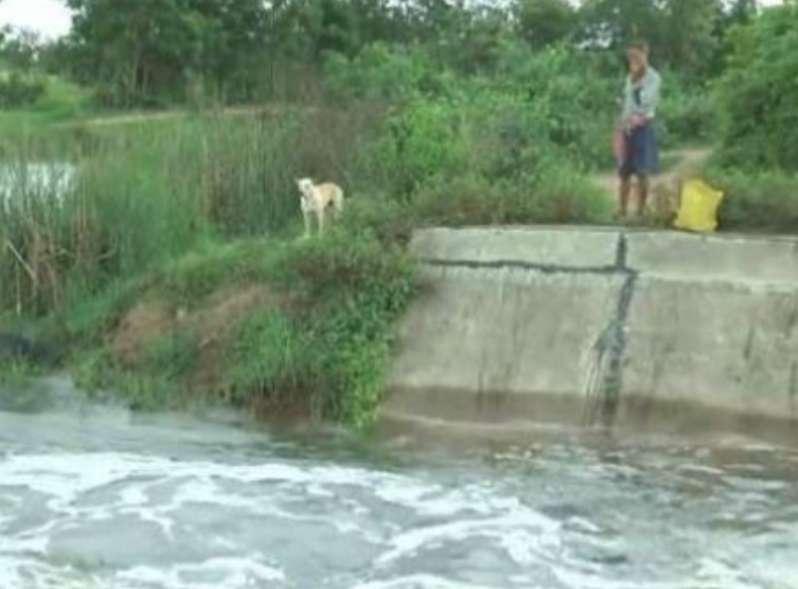 """وفاء الكلاب.. """"نوفا """" كلب يرفض مغادرة ضفة النهر بعد غرق صاحبه"""