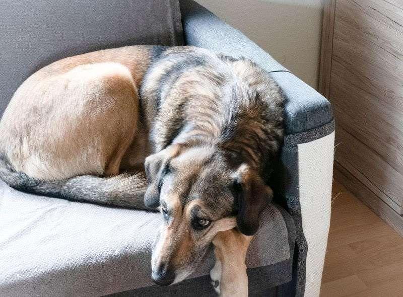 عايز تشتري كلب: إختار وإحنا حاندفعلك
